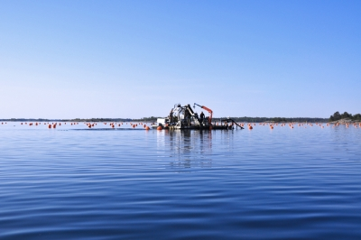 Farming blue mussels to combat eutrophication and contribute to Blue Growth opportunities